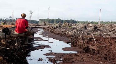 Destruction of the rainforest