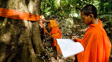 A monk has draped a tree trunk with orange cloth and is marking its location on a map.