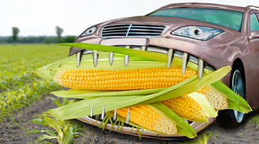 illustrated car eats maize