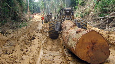 A heavy tractor dragging a tree trunk out of the forest