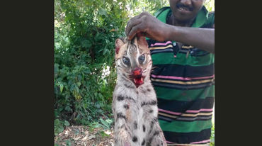 A poacher posing with a dead fishing cat
