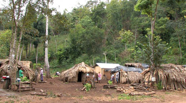 A refugee camp in the forest