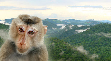 Portrait of a monkey with forested hills in the background
