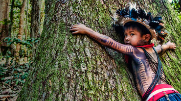 A young Paiter Surui treehugger