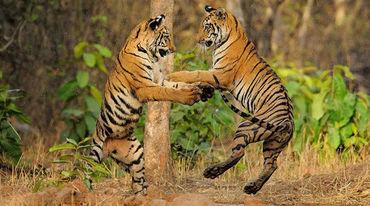 tiger spiele de