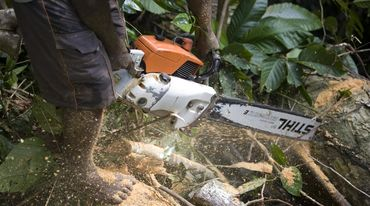 A logger with a Stihl chainsaw