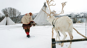 Traditional Sami with reindeer