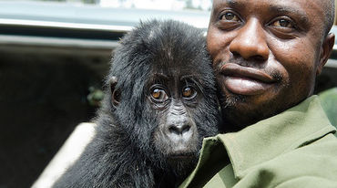 Virunga ranger with Gorilla baby in arms