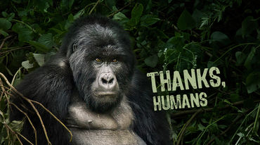 "A gorilla with the caption, ""Thanks, humans"""