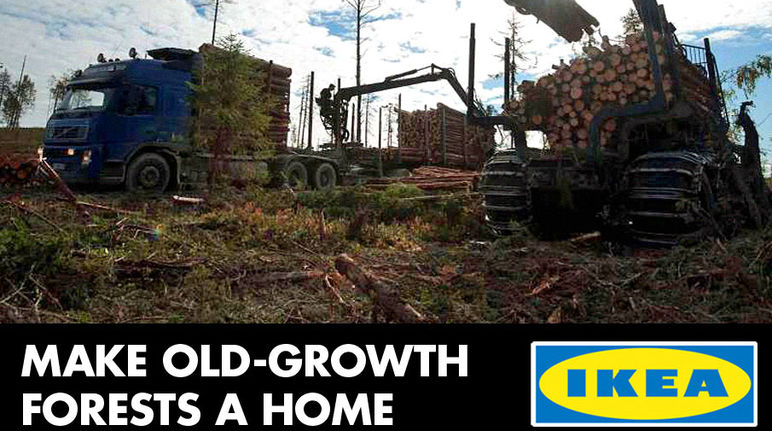 Ikea is making old-growth forest a home