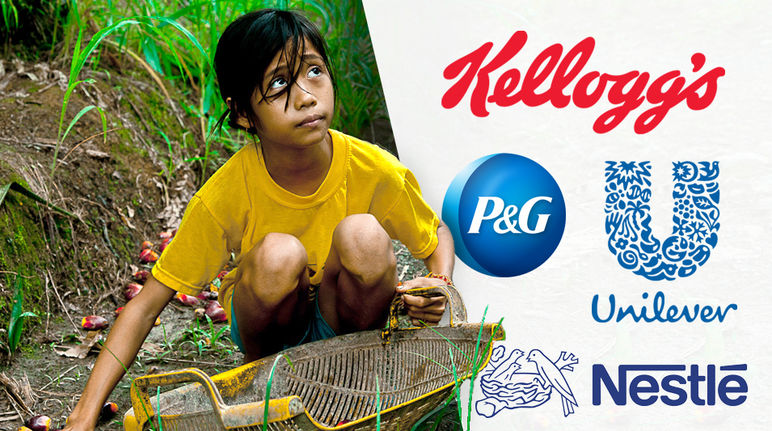 Kellogg's, Nestlé, Unilever: child labor for palm oil!