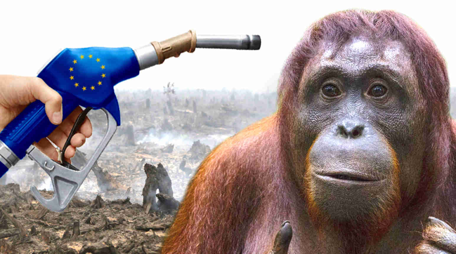 https://www.rainforest-rescue.org/uploads/photos/article/wide/xl/x2/eu-biosprit-politik-zerstoert-regenwaelder-orang-utan.jpg