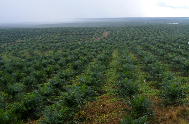 Success As Hawaii S Largest Energy Company Halts Palm Oil
