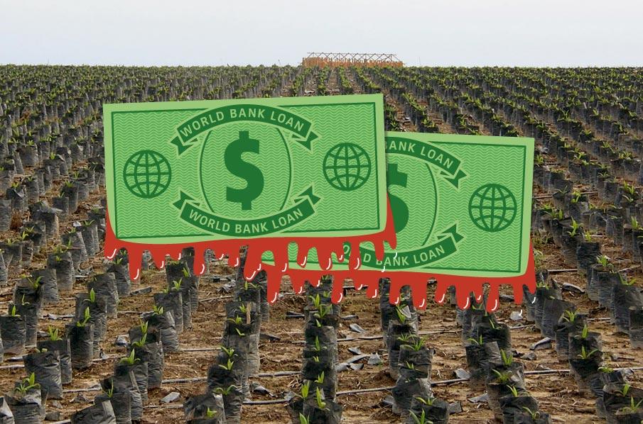 Honduras: World Bank palm oil ...