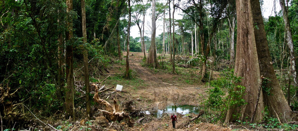 A swathe of forest is being cleared for the superhighway