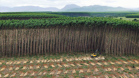 A plantation in Brazil