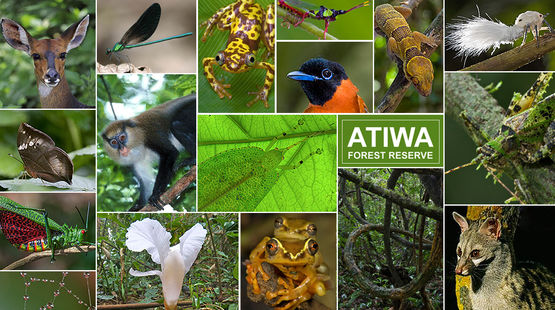 Different species in Atiwa
