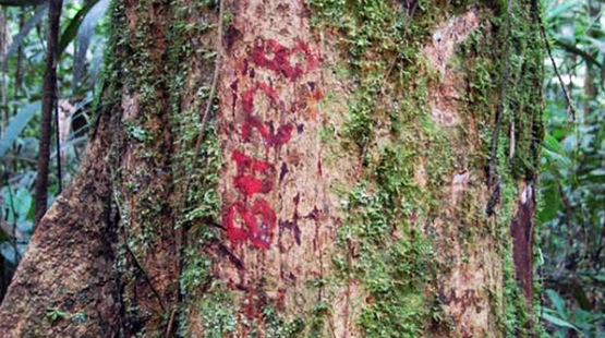 Marked tree in the rainforest