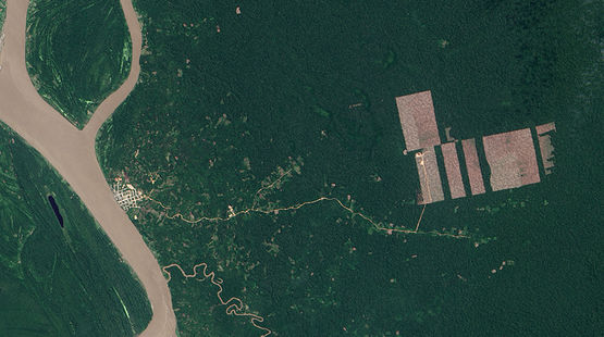 Aerial view of rainforest destruction