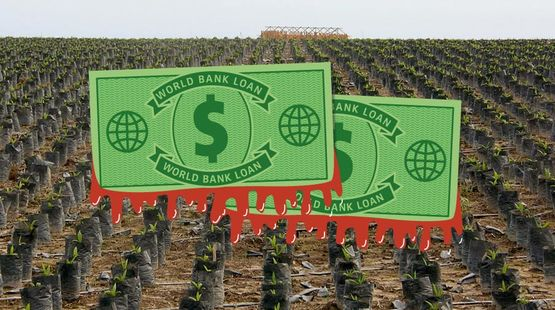 World Bank dollars in front of a palm oil plantation